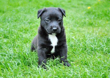 animal-cute-dog-59965